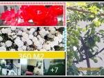 Manisa Salihli üçtepe satılık kadastrol yola çepheli köye yakın tarla