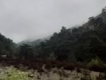 Manisa Kırkağaç gökçukur da satılık kadstrol yolu olan orman kenarı
